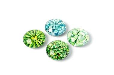 Magneten van glas met vetplantjes afbeeldingen - set van 4 stuks